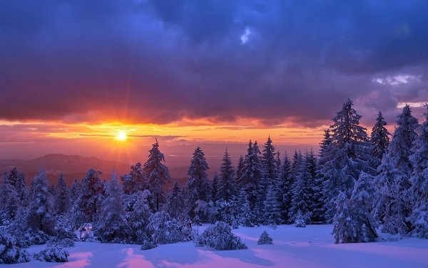Earth Winter Sunset Tree Snow Cloud Nature HD Wallpaper   Background Image