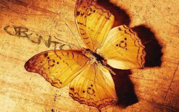 Animal - Butterfly Wallpapers and Backgrounds ID : 91043