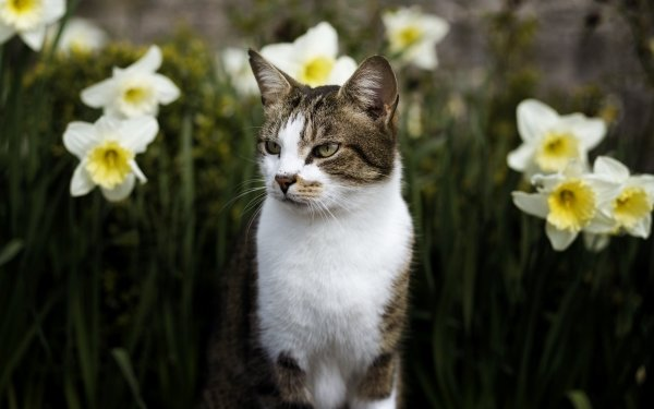 Animal Cat Cats Pet Flower Daffodil HD Wallpaper | Background Image