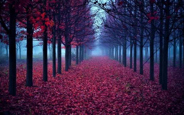 Man Made Path Fall Foliage Leaf Tree HD Wallpaper | Background Image
