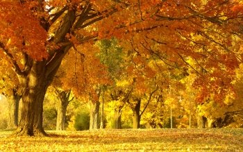 Earth - Autumn Wallpapers and Backgrounds ID : 93261