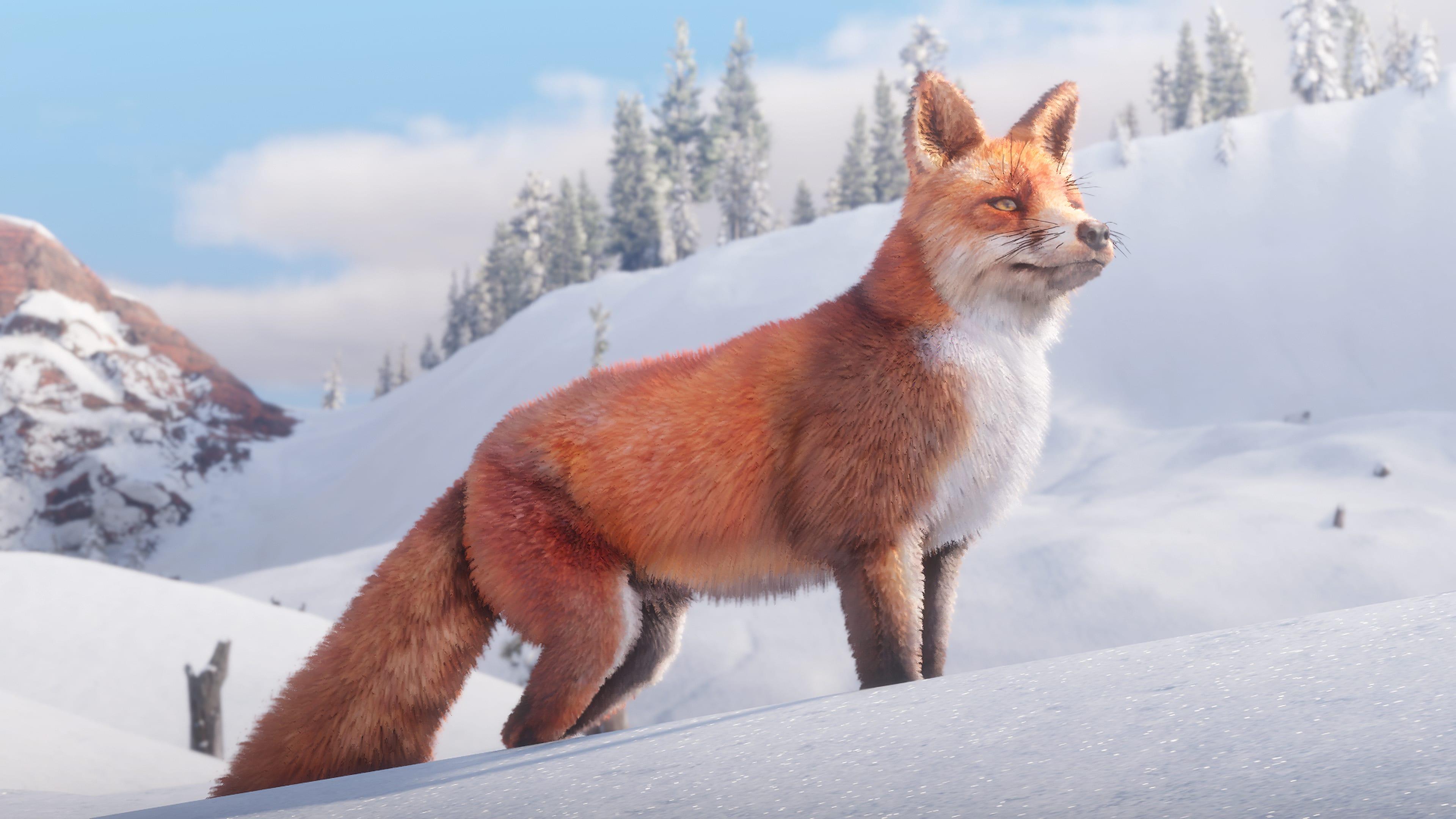 Red Fox 4k Ultra Fondo De Pantalla Hd Fondo De Escritorio