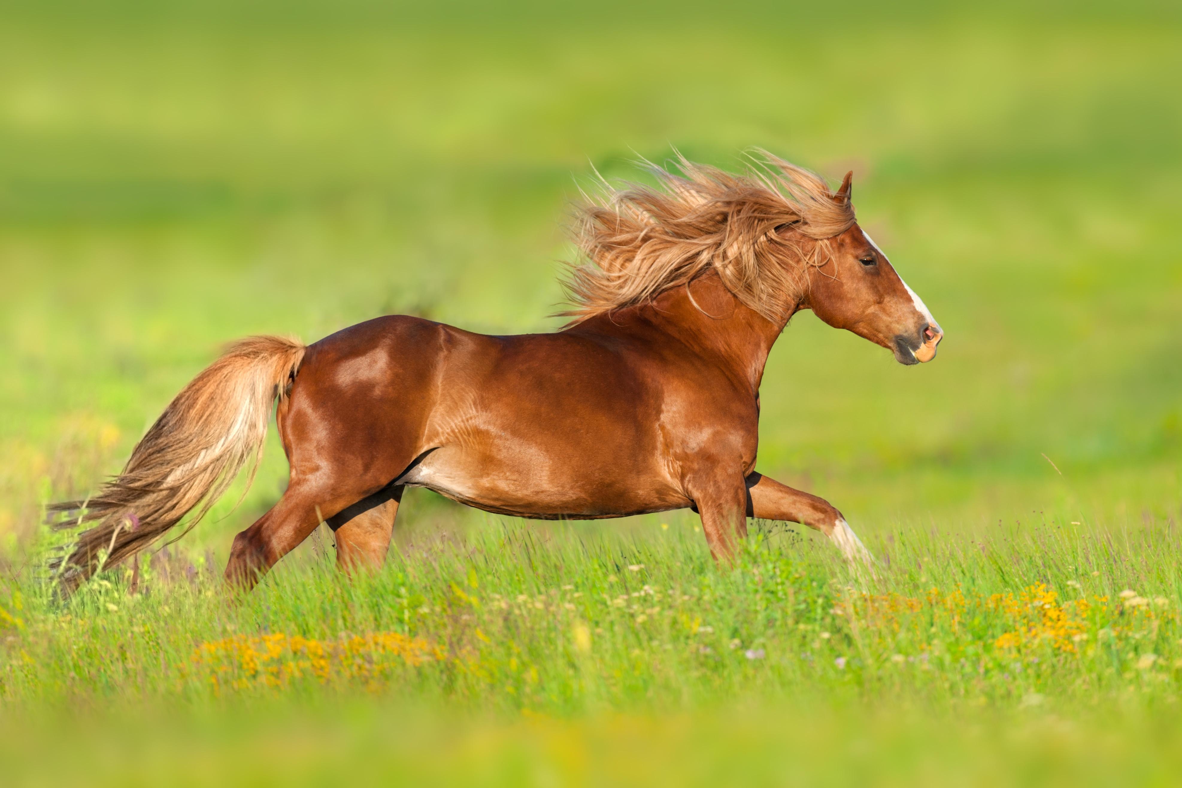Horse 4K Ultra Hd Wallpaper  Background Image  3948X2632 -1728