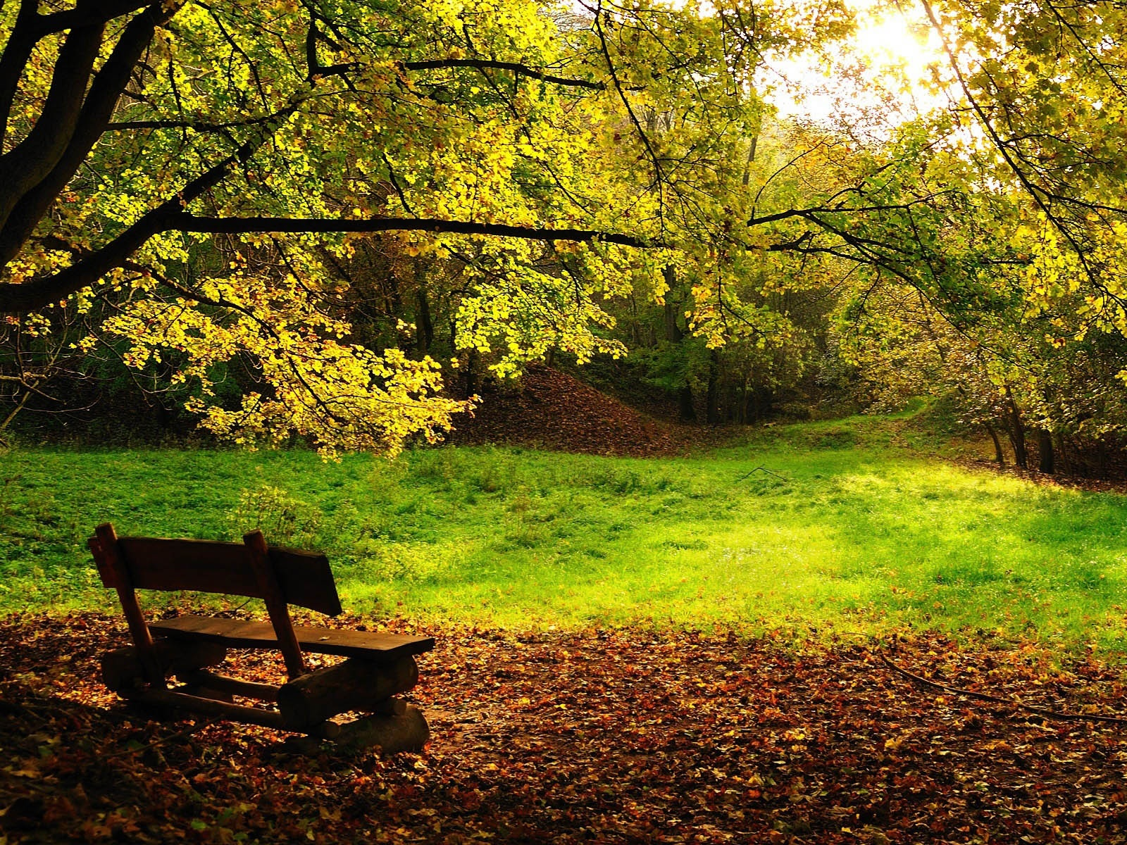 Man Made - Bench  - Tree - Trees Wallpaper