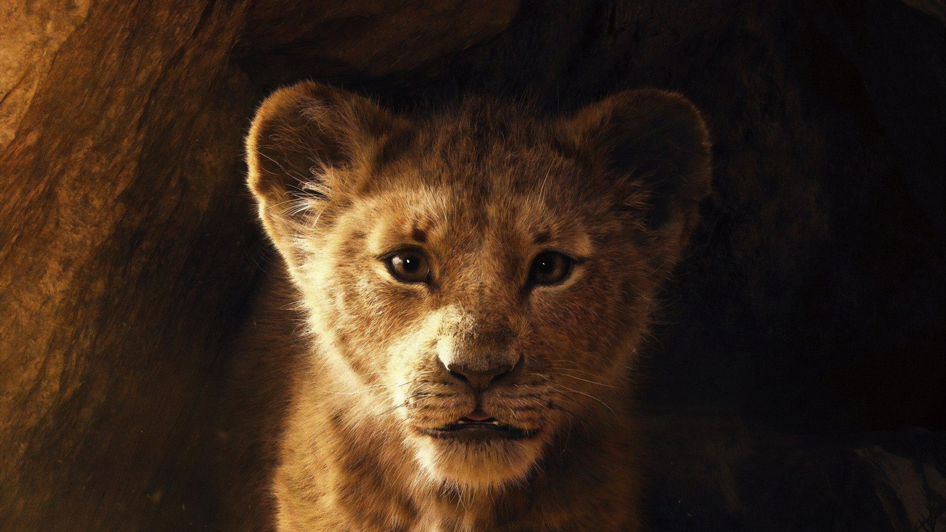 8 The Lion King 2019 Fonds D Ecran Hd Arriere Plans Wallpaper
