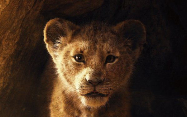Movie The Lion King (2019) Simba Lion HD Wallpaper | Background Image