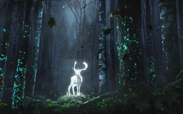 Fantaisie Cerf Animaux Fantastique Forêt Nuit Animaux Fond d'écran HD   Arrière-Plan